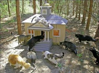 Cat city hall