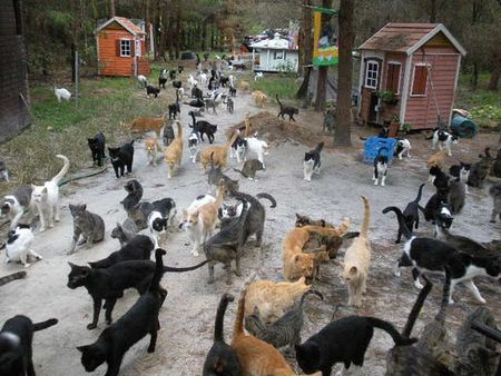 Tons of cats