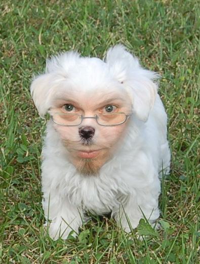 Wallythedog